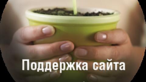 Поддержка сайта Киев